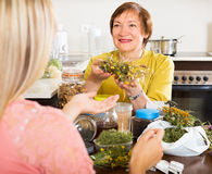 Womans with medicinal herbs Royalty Free Stock Photo