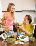 Womans with medicinal herbs Stock Photos