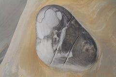 womb Stock Afbeeldingen