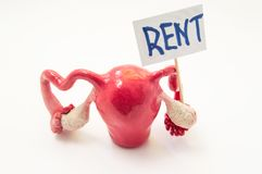 Womb for rent commodification of womb or surrogacy pregnancy concept photo. 3D anatomical shape of the uterus with ovaries stand. Ing on a white background with stock photo