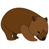 wombat Images stock