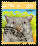 Wombat Australian Postage Stamp. AUSTRALIA - CIRCA 1987: A used postage stamp from Australia, depicting and illustration of a Wombat, circa 1987 Stock Photo