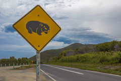 Wombat Crossing Stock Image