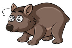 Wombat with dizzy face Stock Photo