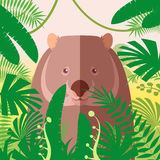 Wombat on the Jungle Background Stock Images
