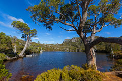 At at Wombat Pool with ancient Pencil Pine trees growing on lake Royalty Free Stock Image