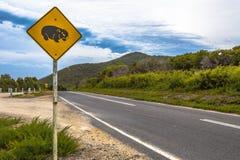 Wombat skrzyżowanie Obraz Stock