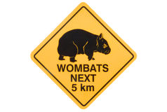 Australia, Australian Wombat yellow road warning sign isolated on white background. Australian road sign warning of stray wombats Stock Image