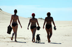 Women. Three young sexy caucasian women walking on the beach towards the sun with their little dog in opposite light in the afternoon Stock Images