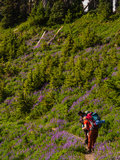 Women Backpackers Photographing Wild Flowers Royalty Free Stock Photo