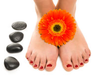 Women beautiful feet with a pedicure Royalty Free Stock Photography