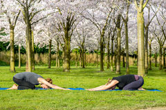 Women in bow pose Royalty Free Stock Photos
