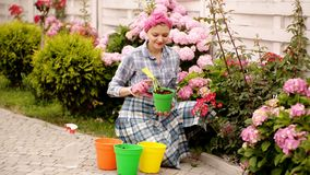 Women care flowers in pots. Flowers in color pots. Woman dig flowers. Beautiful spring flowers. Women in garden. Woman. Gardening flower plants in garden stock video footage