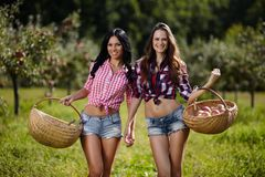 Women carrying baskets with apples Royalty Free Stock Image