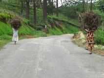 Women carrying brushwood Stock Image