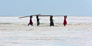 Women carrying plywood in the desert. Women carrying plywood on their heads in the salt marsh desert of the Rann of Kutch, in Gujarat, India.  The construction Stock Photo