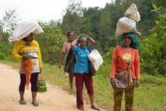 Women carrying sacks on head in Indonesia Stock Image