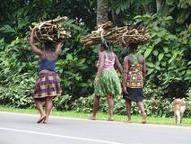 Women carrying wood Stock Photo