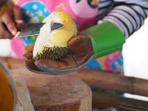 Women are knife casing durian for sell eat. Women are casing durian in hand for sell eat stock images