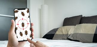 Women are checking for unusual things and detecting bed bugs in. The bedroom royalty free stock photography