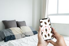 Women are checking for unusual things and detecting bed bugs in. The bedroom stock images