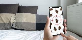 Women are checking for unusual things and detecting bed bugs in. The bedroom stock photo