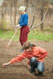 Women checkrows set onion Royalty Free Stock Photography