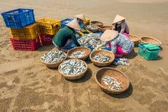 Women classifying fish Royalty Free Stock Image