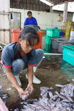 Women clean the freshly caught fish and squid Royalty Free Stock Photo