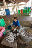 Women clean the freshly caught fish and squid Stock Photos