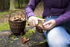Women cleaning mushroom after Picking, Mushrooming Royalty Free Stock Image