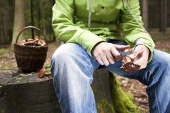 Women cleaning mushroom after Picking, Mushrooming Royalty Free Stock Image