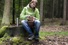 Women cleaning mushroom after Picking, Mushrooming Stock Photography