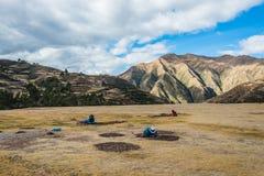 Women collecting moraya  Chincheros town peruvian Andes  Cuzco P Royalty Free Stock Photos