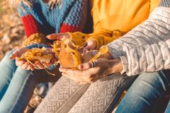 Women in colorful knitted clothing hold autumn yellow leaves in their hands stock photos