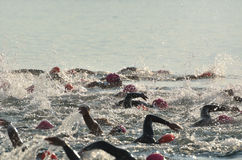 Women Competing in Open Water Swim Race Stock Photos