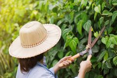 The gardeners are cutting trees. royalty free stock images