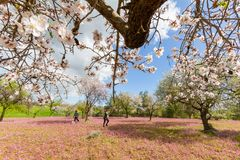 Women and dog enjoying themselves in a field of blossoming almond trees and purple flowers during spring in Cyprus royalty free stock image