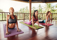 Women doing cobra pose on fitness mat at health club Royalty Free Stock Photo