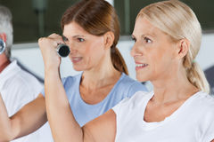 Women doing dumbbell training Stock Image