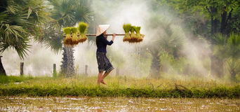 Women farmer Royalty Free Stock Photography