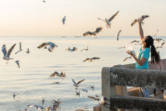Women feed seagull. Royalty Free Stock Photography
