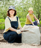 Women fertilizes  soil Royalty Free Stock Photography