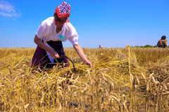 Women in the field. Woman working in a field of wheat,  photography Stock Photos