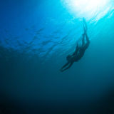 Women free diving Royalty Free Stock Photo