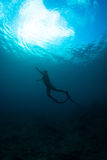 Women free diving. Silhouettes of a young woman free diving in the pacific ocean royalty free stock photography