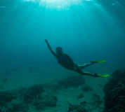 Women free diving. Young woman snorkeling on a coral reef royalty free stock photos