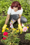 Women gardener arranging flowers Stock Photo