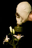 Women in a gas mask smells a flower. Person in a gas mask smells a white flower isolated against black background Stock Images