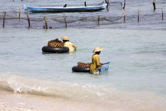 Women gather seaweed, - Nusa Penida, Indonesia. Two Women gather seaweed, - Nusa Penida, Indonesia stock photo